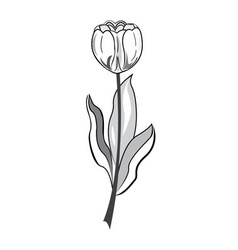 Black and white tulip vector image vector image