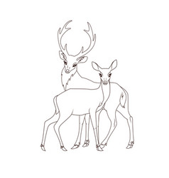 Coloring book couple deers isolated vector