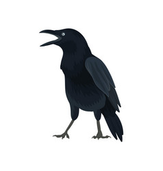 Detailed icon of raven large bird with vector