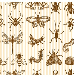 Insects sketch seamless pattern monochrome vector image