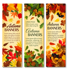 autumn nature season banner set with fallen leaves vector image