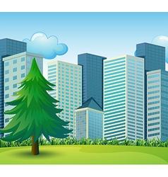 A big pine tree growing near tall buildings vector