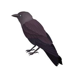 Detailed portrait of blackbird bird with vector