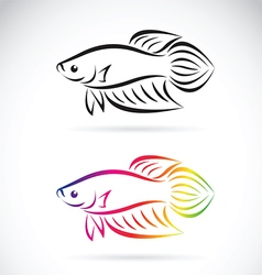 Fighting fish vector