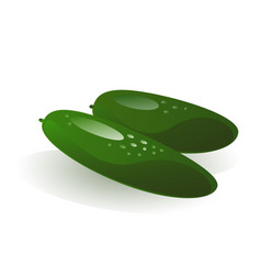 green cucumber vector image