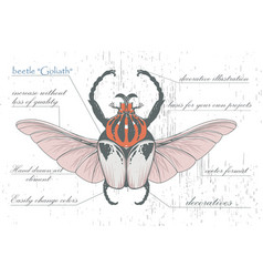 Hand-drawn goliath beetle with skull wings vector