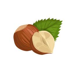 Hazelnut with leaf vector