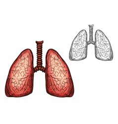 lung organ of human anatomy isolated sketch vector image