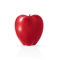 realistic apple vector image