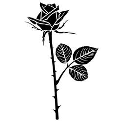 rose flower bud vector image