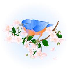 bird bluebird small thrush songbirdons vector image