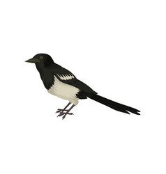 detailed icon of wagtail small black and vector image