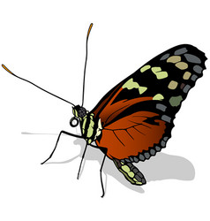 Monarch butterfly profile vector