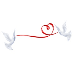 Pigeons with a ribbon in the form of heart vector