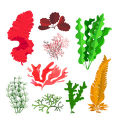 Seaweeds and coral reef underwater collection vector