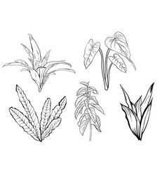 Tropical leaves dense jungle collection hand vector