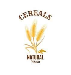 Wheat ear cereals isolated icon vector