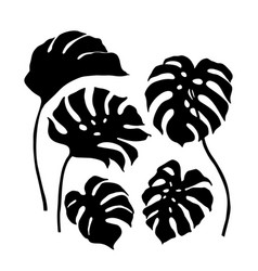 beautiful tropical monstera leaves silhouettes vector image