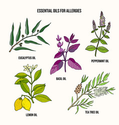 Essential oils fot allergy treatment vector