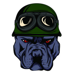 Face of bulldog biker with helmet vector