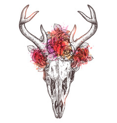 sketch deer skull with flowers wreath vector image