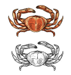 Crab sketch seafood menu and sea fishing vector