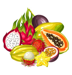 Exotic tropical fruits collection vector