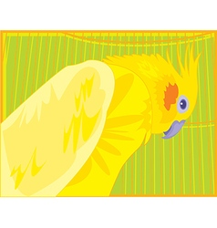 perrot c1 vector image