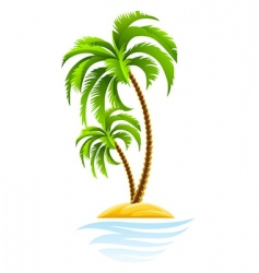 tropical palm on island vector image