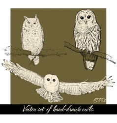 Set of isolated hand-drawn owls 2 vector image vector image