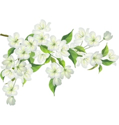 Blossoming branch of apple tree vector image