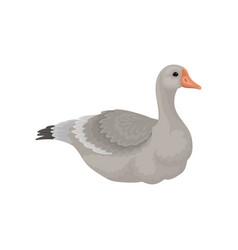 Flat design large goose side view vector