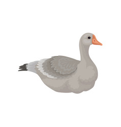Flat design of large goose side view vector