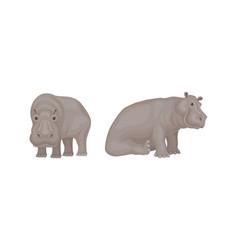 Hippopotamus or hippo as large semiaquatic mammal vector