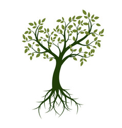 Shape of green tree with leaves and roots vector