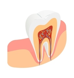 Tooth cross section icon isometric 3d style vector image