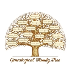 Vintage Genealogical Family Tree Hand drawn vector image