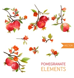 Vintage Pomegranates Flowers and Leaves Watercolor vector image vector image