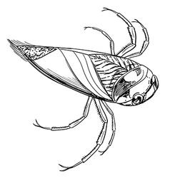 Water beetle vector image vector image
