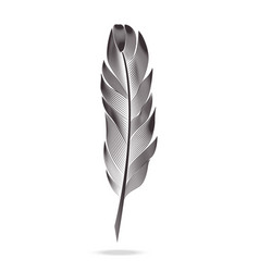 black and white feathers graph contour vector image