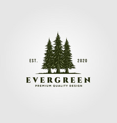 evergreen logo vintage design pine trees logo vector image
