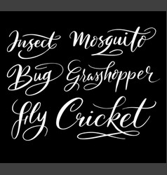 Insect and bug hand written typography vector