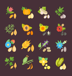 Set flat icons of seeds vector