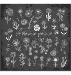 set of doodle sketch flowers on blackboard vector image