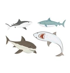 Shark character vector