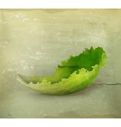 Lettuce old style vector image
