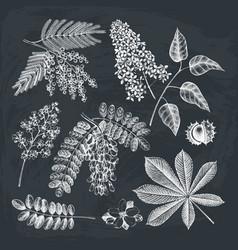 vintage blooming trees sketch set vector image vector image