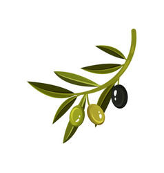 Branch with leaves two green and one black olive vector