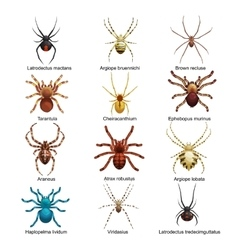 Spiders cartoon set dangerous insects collection vector