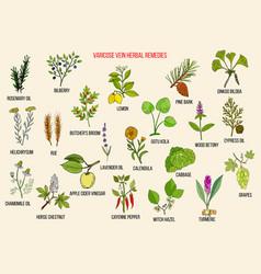 Varicose vein herbal remedies vector
